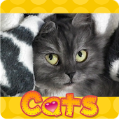 Сat Jigsaw Puzzles(Cat Puzzle)