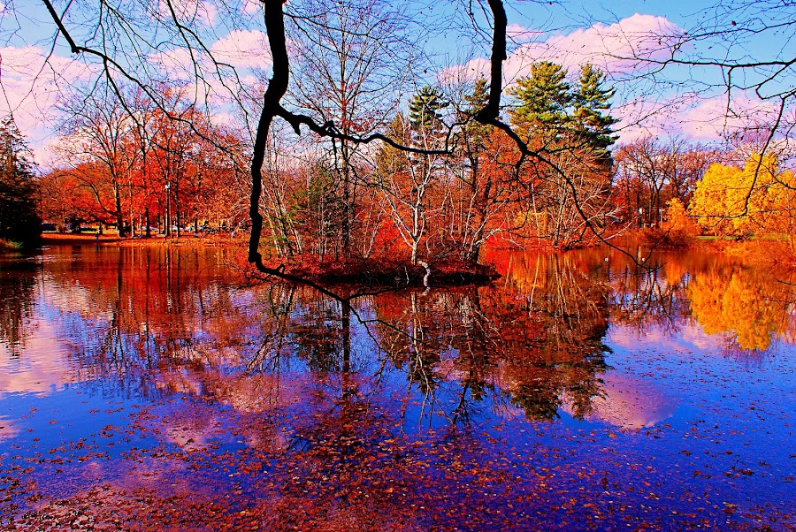 Autumn Lake by Dmitriy Tucker - Nature Up Close Trees & Bushes ( fall leaves on ground, fall leaves, fall lake water foliage color )