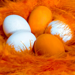 Orange Delight by Dale Frazier - Nature Up Close Other Natural Objects ( orange, eggs, elegant, orange egg, orange feather, fun, egg, conceptual, feather, soft, , colorful, mood factory, vibrant, happiness, January, moods, emotions, inspiration )