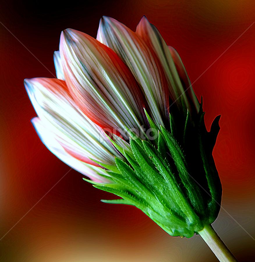 by Biljana Nikolic - Flowers Single Flower ( , colorful, mood factory, vibrant, happiness, January, moods, emotions, inspiration )