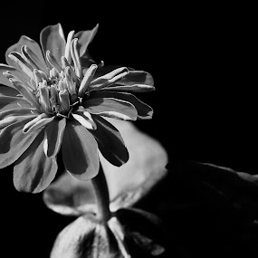 Just One by Mark William Tikoalu - Black & White Flowers & Plants ( nature, bw, garden, photography, flower, black & white, macro )