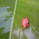 Percevejo (Bug)