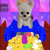 Coin Dog