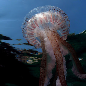 Sea and sky by Adi Drnda - Animals Sea Creatures (  )