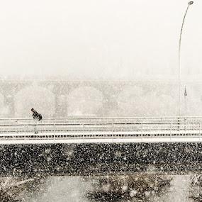 Snowing by Geanina Boureanu - City,  Street & Park  Street Scenes