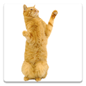 Dancing Cat icon