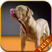Dogs licking screen LWP HD