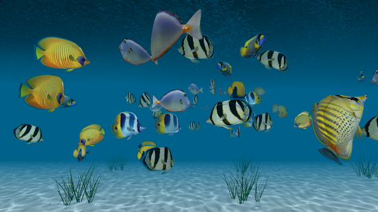 Ocean Tropical Trial 3D HD LWP