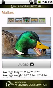 Ducks Unlimited - screenshot thumbnail
