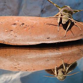 by Marijan Alaniz - Nature Up Close Rock & Stone (  )