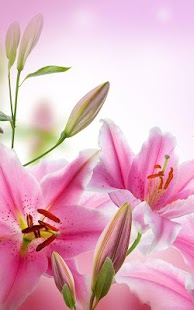 Pink Flowers Live Wallpaper- screenshot thumbnail