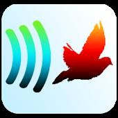Birdy-Pigeon & Bird Control