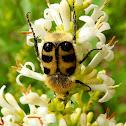 Bee chaffer