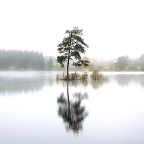 Tree in the Fog by Benny Berget - Landscapes Waterscapes