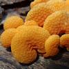Orange pores