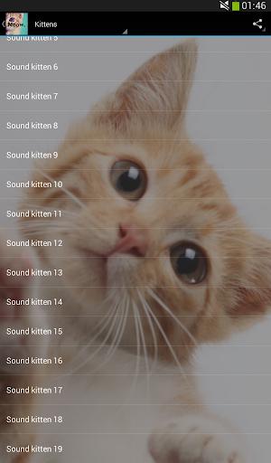 听起来猫!