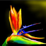 The bird of paradise <3