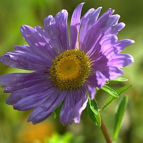 by Iztok Urh - Flowers Single Flower