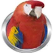 BirdsKidz