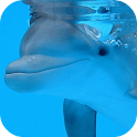Dolphin underwater icon