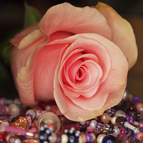 Beaded rose by Christine Schmidt - Flowers Flower Arangements ( rose, pink, beads, necklace, flower )