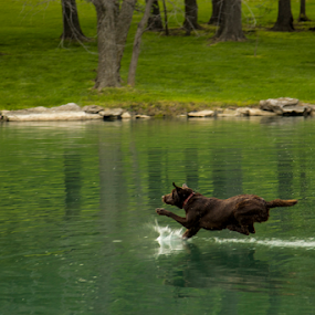 by Scott Mckay - Animals - Dogs Playing (  )