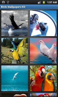 Birds Wallpapers HD