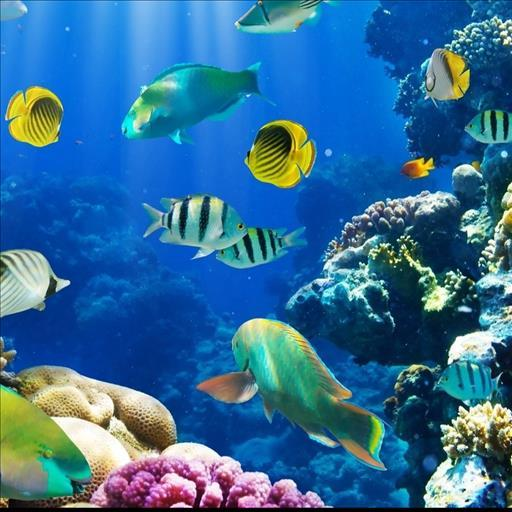 live underwater wallpaper for windows 7