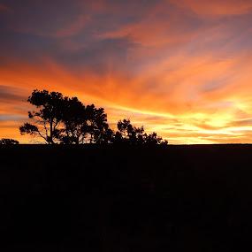 Sunset  by Scott Morgan - Landscapes Sunsets & Sunrises ( orange, blue, silhouette, sunset, black,  )