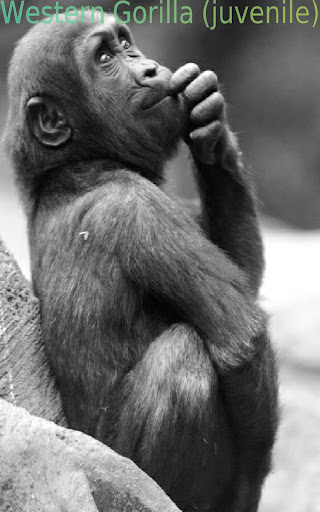 Amazing Apes FREE
