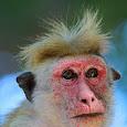 Research Project on Mammals in Sri Lanka