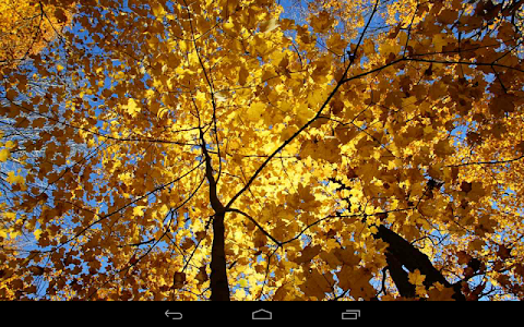 Autumn Wallpaper screenshot 14