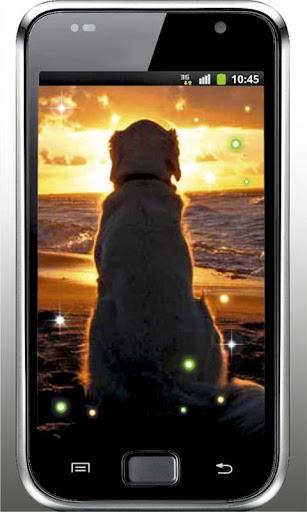 Dog Love Top live wallpaper