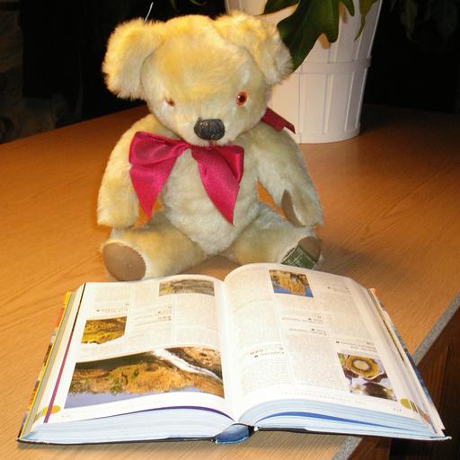 Teddy Bears In Action FREE 教育 App LOGO-APP試玩