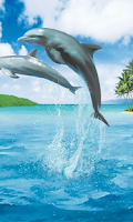Screenshot of Dolphins Wallpapers