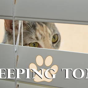 Peeping Tom by Nancy Lowrie - Typography Captioned Photos ( peeping, cat, window, blinds, captioned )
