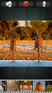 Divoká zvířata tapety - náhled