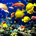 Coral Sea icon