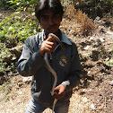 common trinket snake