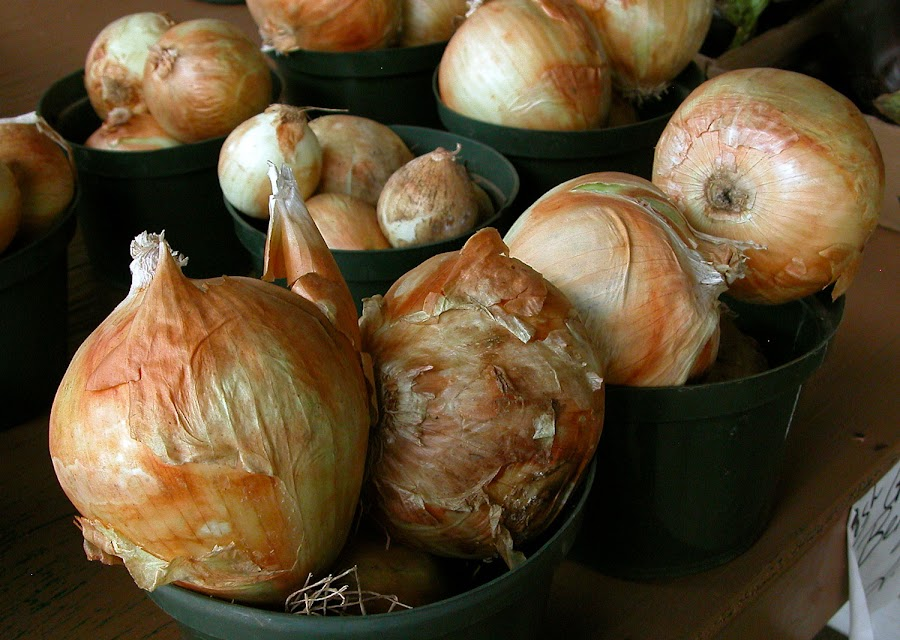 Group of Onions by Robin Morgan - Food & Drink Fruits & Vegetables