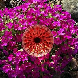 Strange flower in our back yard. by Gene Richardson - Instagram & Mobile Android