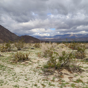 anza borrego  by Elvis Gutierrez - Uncategorized All Uncategorized