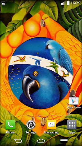 玩免費個人化APP|下載巴西 動態壁紙 app不用錢|硬是要APP