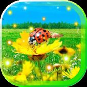 Summer Sunny Sky LiveWallpaper