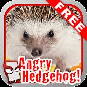 Angry Hedgehog Free!