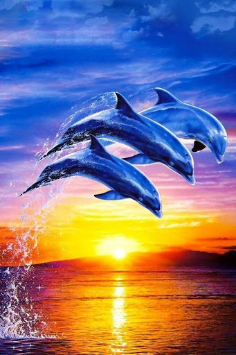 Dolphin Wallpaper 3D FREE
