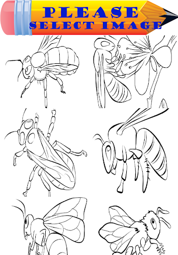 Baby Bee Coloring Book