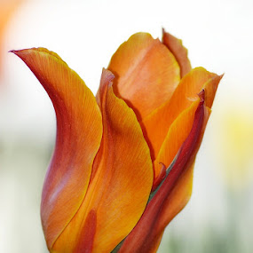 by Nevenka Zajc Medica - Flowers Single Flower