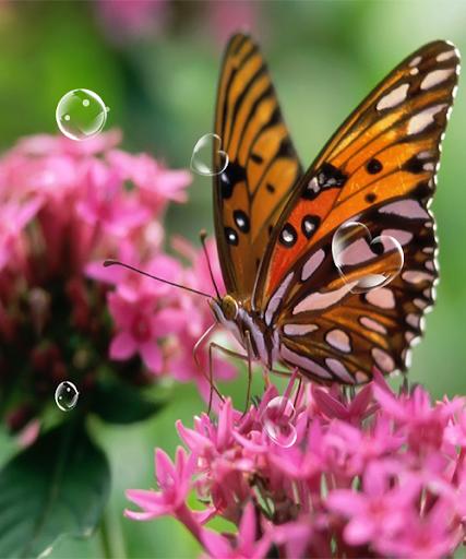 無料个人化Appの蝶の壁紙|記事Game