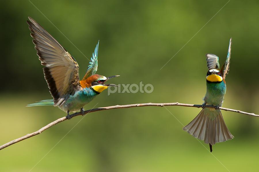 The wrangler by Alberto Carati - Animals Birds